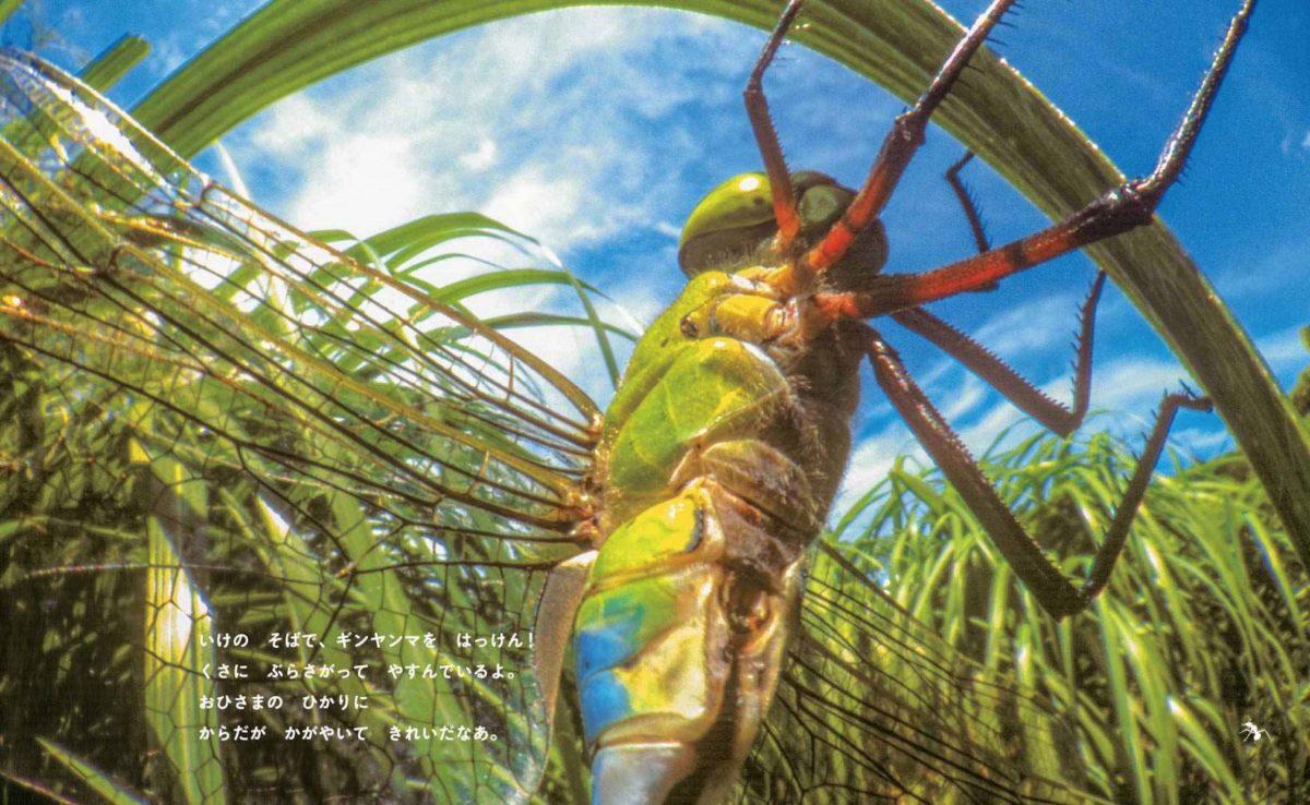 絵本「アリのたんけん」の一コマ2