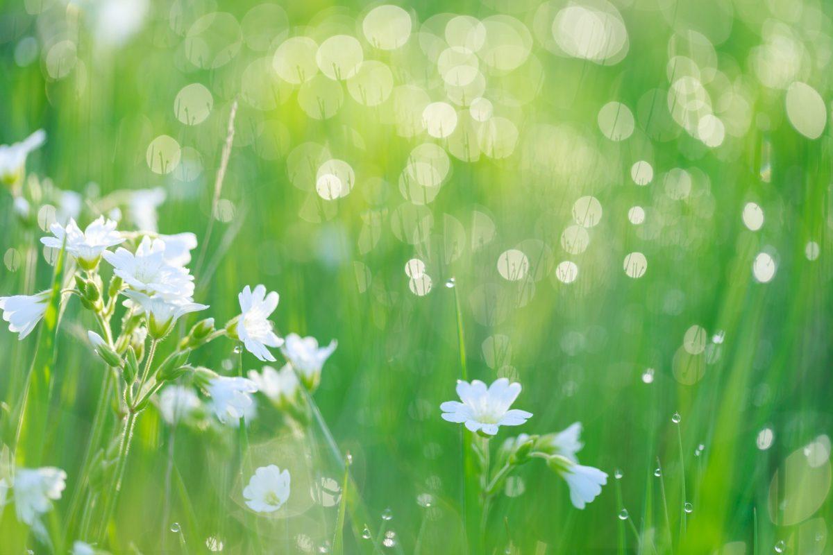 身近な植物と仲良くなろう!草花いっぱいのおすすめ絵本特集