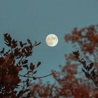 十五夜におすすめ!お月見がテーマの絵本特集
