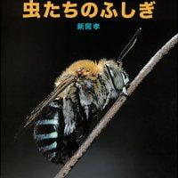絵本「虫たちのふしぎ」の表紙