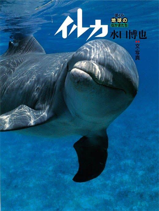 絵本「イルカ」の表紙