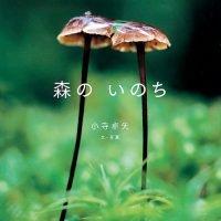 絵本「森のいのち」の表紙