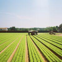 牧場・農場がテーマの絵本特集