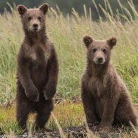 動物:クマの絵本特集