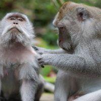 動物:サルの絵本特集