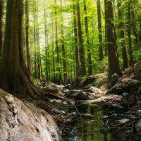 森・林がテーマの絵本特集