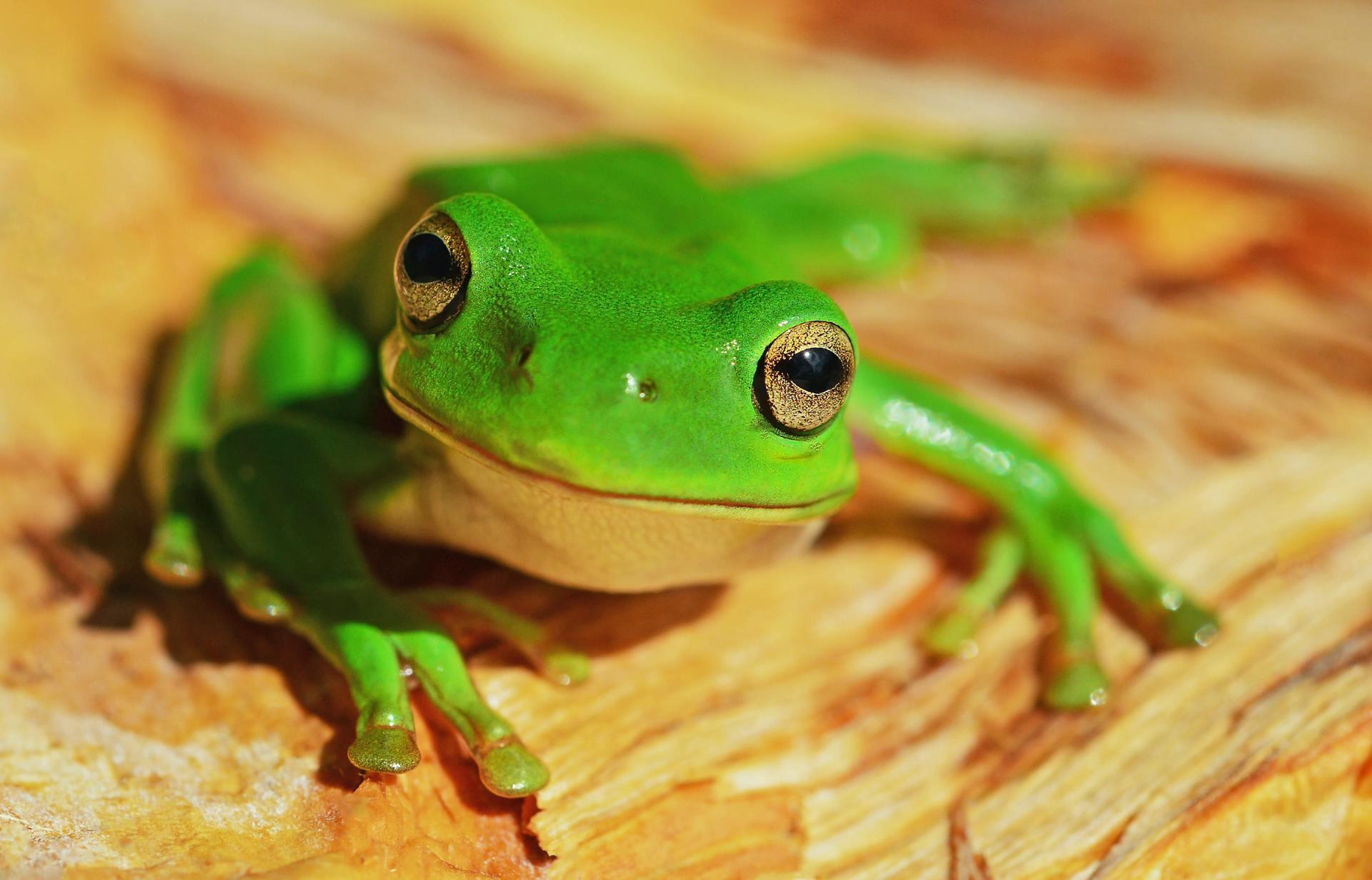 動物:カエルの絵本特集