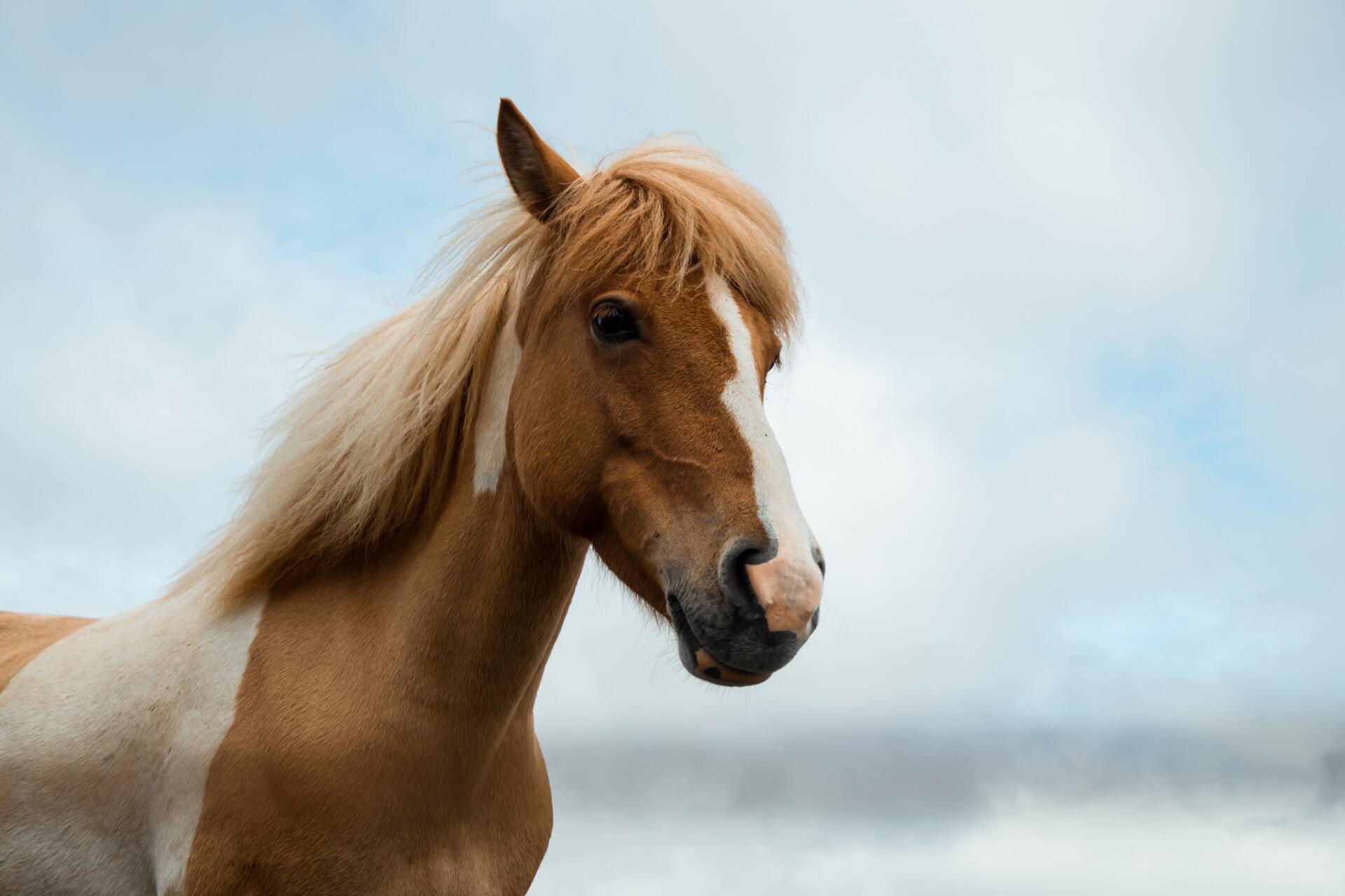 動物:馬の絵本特集