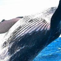動物:クジラの絵本特集