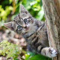 動物:猫の絵本特集