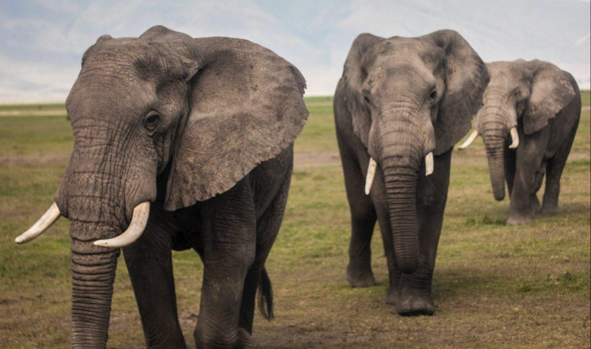 動物:ゾウの絵本特集