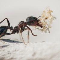 虫:アリの絵本特集