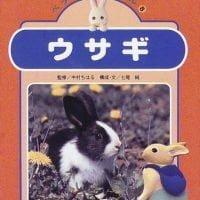 絵本「ウサギ」の表紙