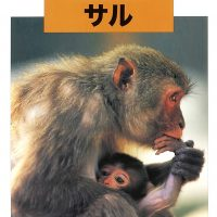 絵本「どうぶつの赤ちゃん サル」の表紙