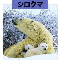 絵本「どうぶつの赤ちゃん シロクマ」の表紙