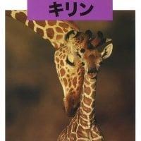 絵本「どうぶつの赤ちゃん キリン」の表紙