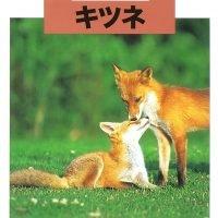 絵本「どうぶつの赤ちゃん キツネ」の表紙