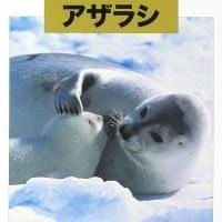絵本「どうぶつの赤ちゃん アザラシ」の表紙