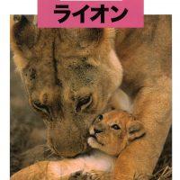 絵本「どうぶつの赤ちゃん ライオン」の表紙