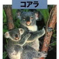 絵本「どうぶつの赤ちゃん コアラ」の表紙